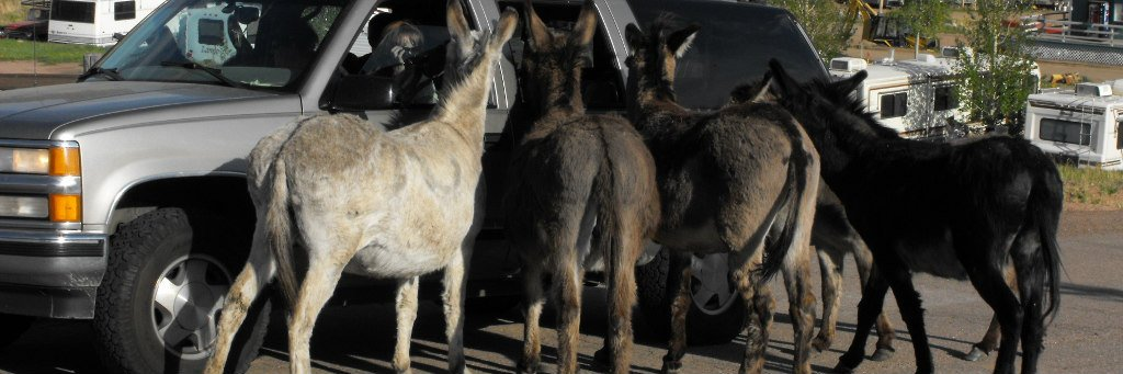 donkeys in cripple creek