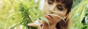 Medical Marijuana Makes Money Magically Materialize
