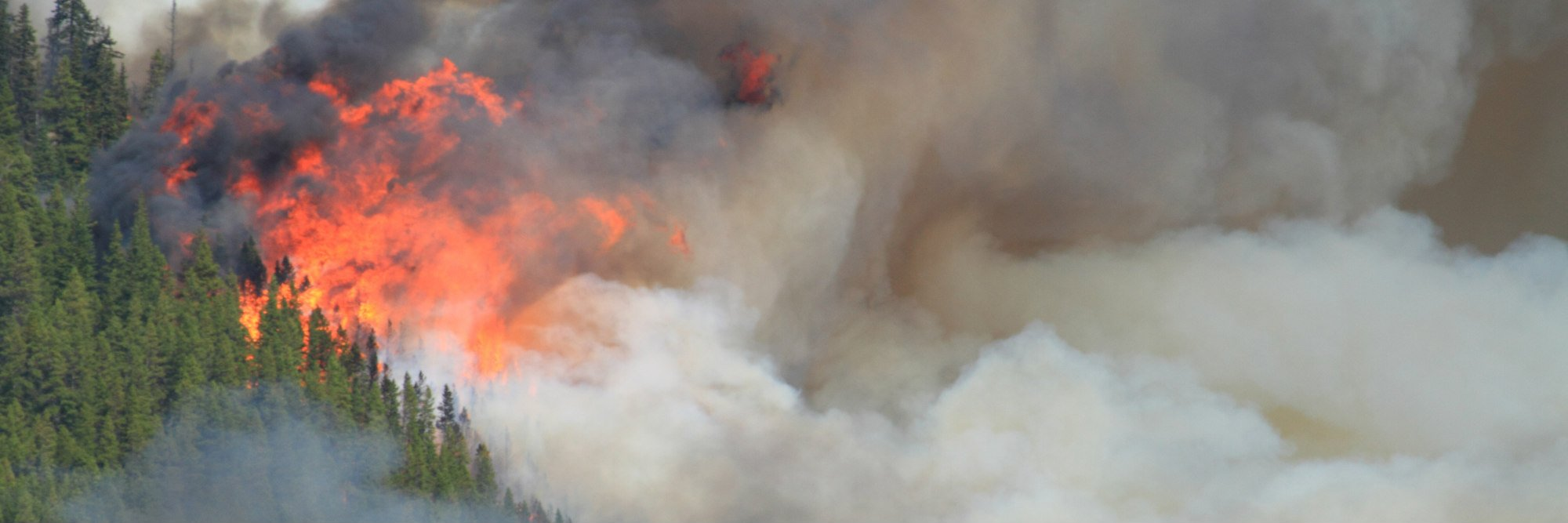 huge flames burning trees