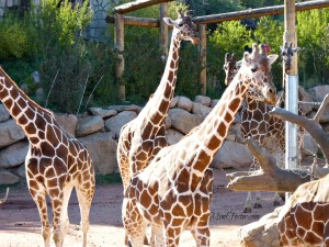 World's Highest Zoo Cheyenne Mountain Colorado Springs