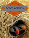 What is a contingency offer?