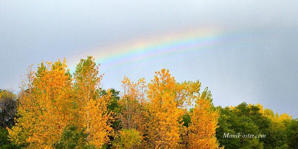 Colorado Springs Weekly Wrap October 25 – 31