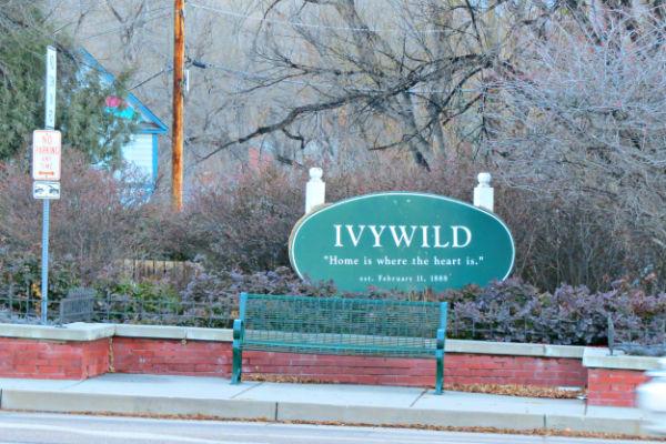 Ivywild