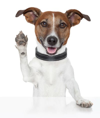 Dog standing waving goodbye or high five