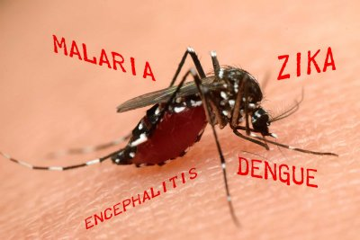 mosquito carrying disease