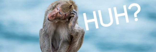 monkey scratching its head