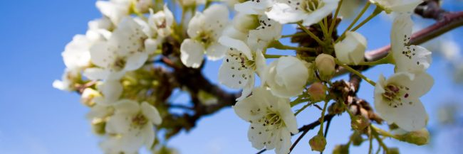 May flowers housing market trends