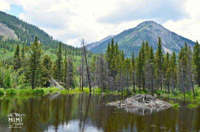 Beaver dam in Colo mountains