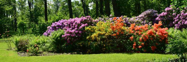 June flowers housing market predictions