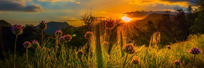 Colorful field autumn colorado springs real estate