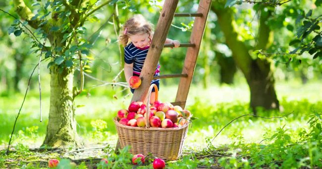 child in orchard august 2021